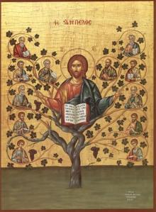 Jesus is the Vine