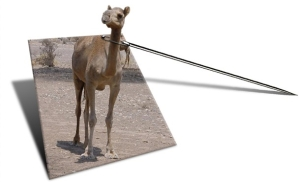 Camel Eye of a Needle
