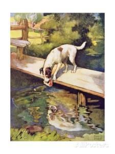 Dog & Bone Aesop